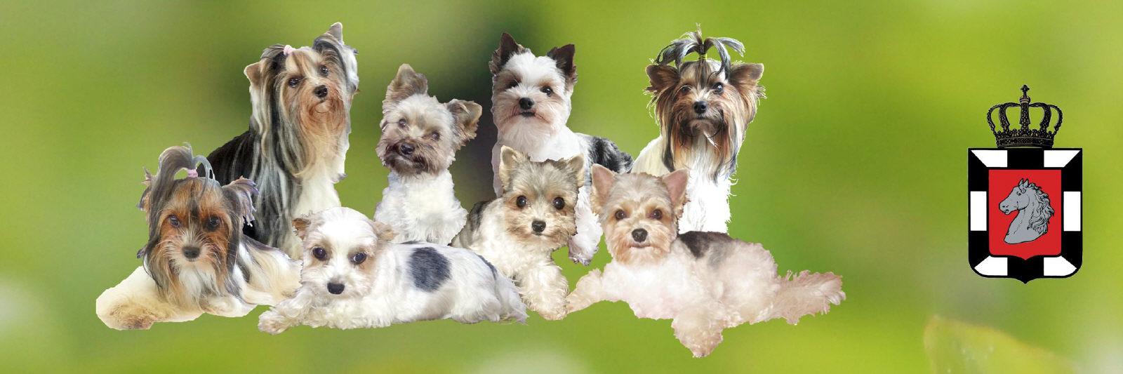 Tipps Zur Pflege Ihres Hundes
